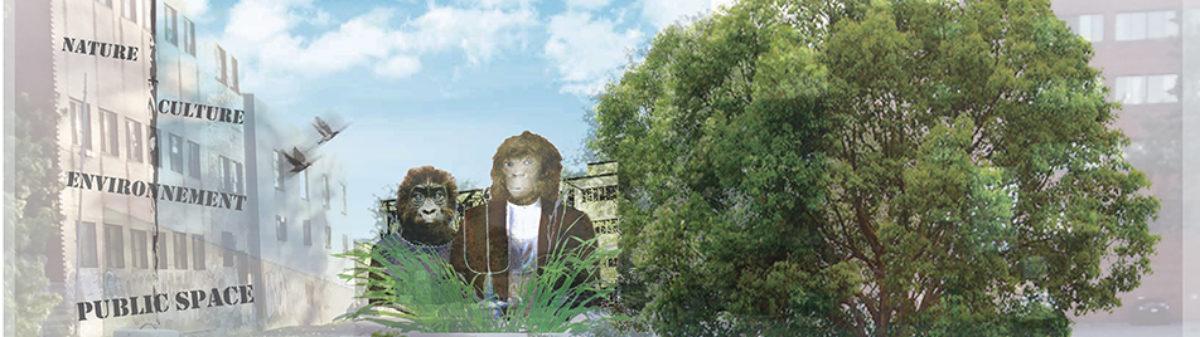 AmiEs du parc des Gorilles / Friends of Gorilla Park